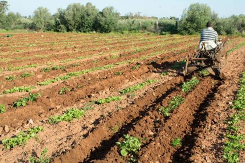 coltivazioni bio 2 (1)
