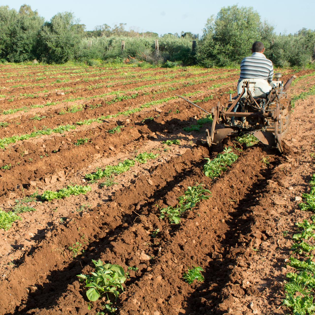 coltivazioni_bio_2A